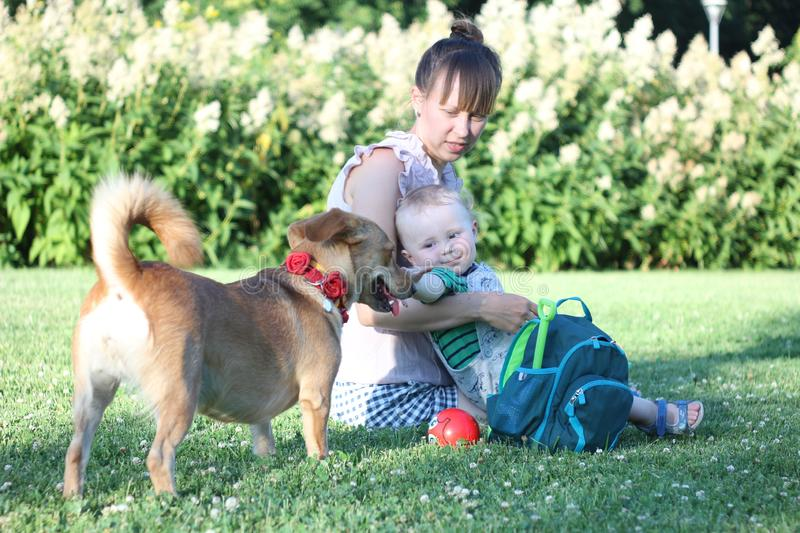 Family with dog in the park on a sunny day. mother holds the child on her lap. Boy look at the dog. With florish collar royalty free stock photography