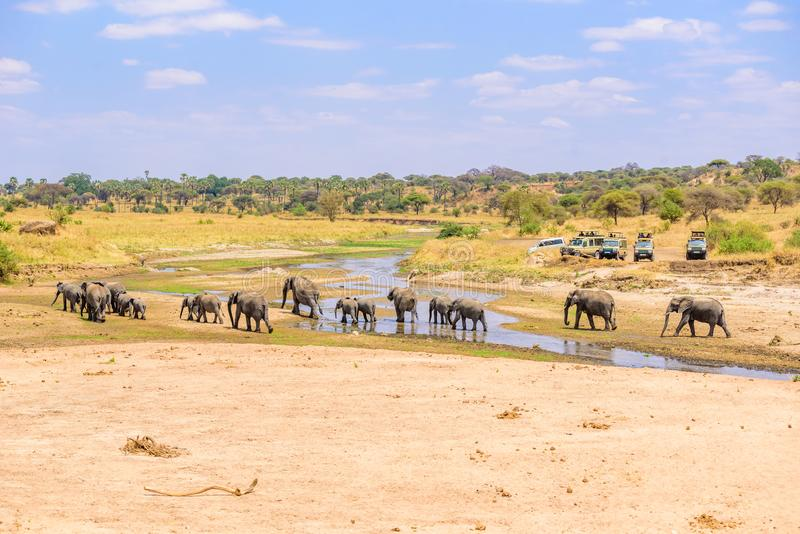 Family of elephants and lions at waterhole in Tarangire national park, Tanzania - Safari in Africa stock photos