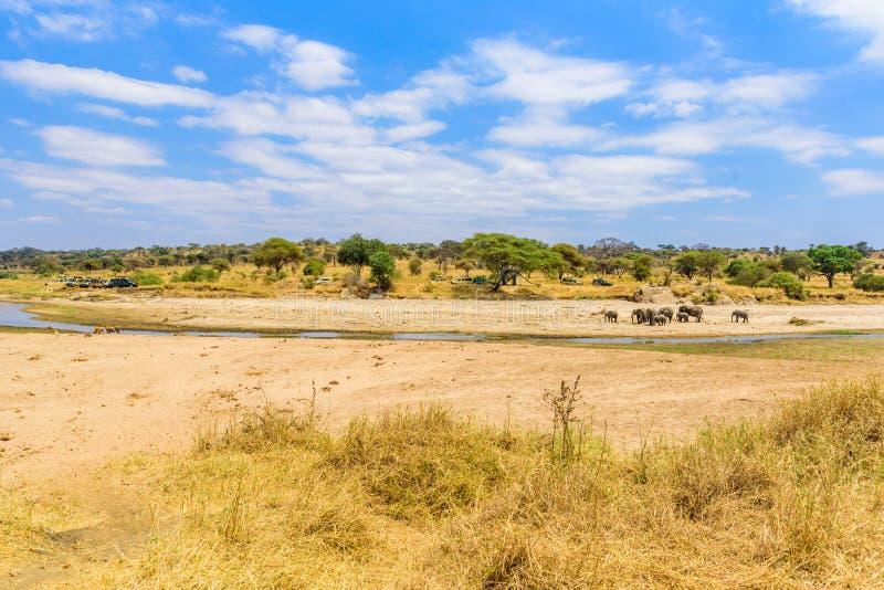 Family of elephants and lions at waterhole in Tarangire national park, Tanzania - Safari in Africa.  stock photo