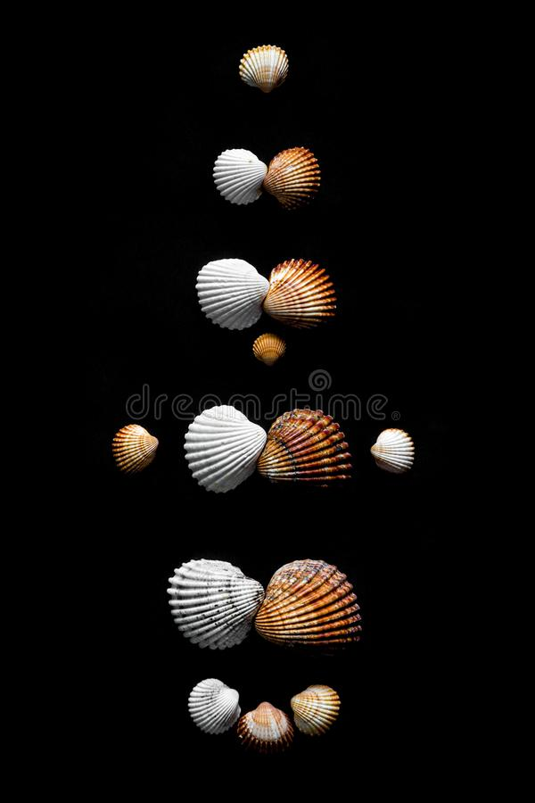 Family evolution shown by sea shells on black background. stock photo