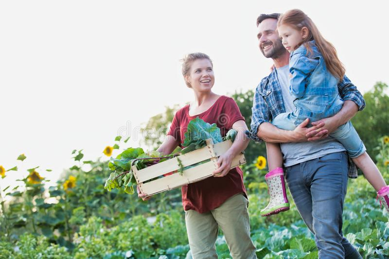 Portrait of a family of famers carrying their vegetables home in wooden boxes, at the end of the day, the Father is carrying their. Family of famers carrying royalty free stock photos