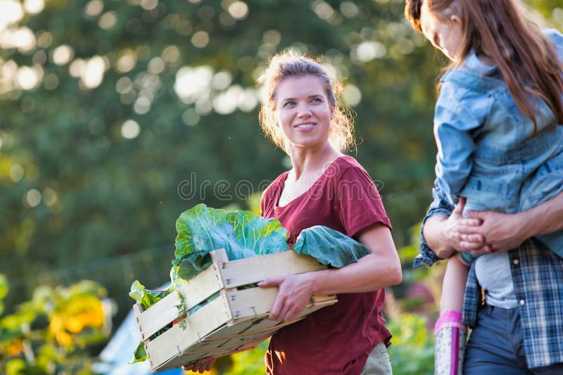 Portrait of a family of famers carrying their vegetables home in wooden boxes, at the end of the day, the Father is carrying their. Family of famers carrying stock photos