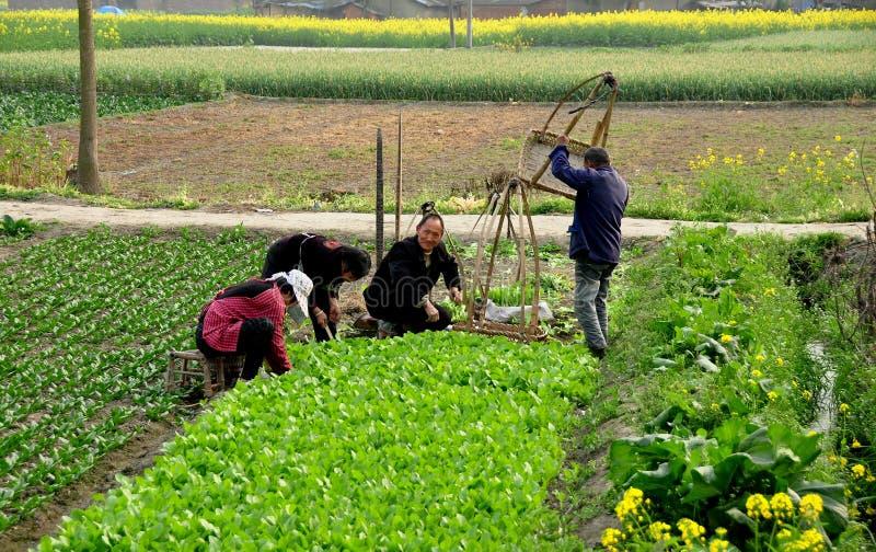 Download Pengzhou, China: Farmers Planting Seedlings Editorial Photo - Image: 29724426