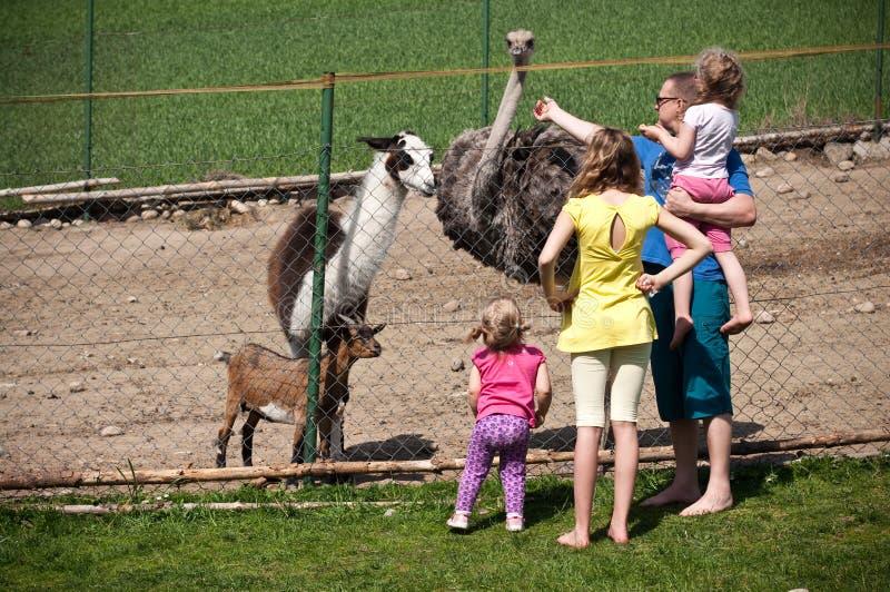 Family feeding animals in farm