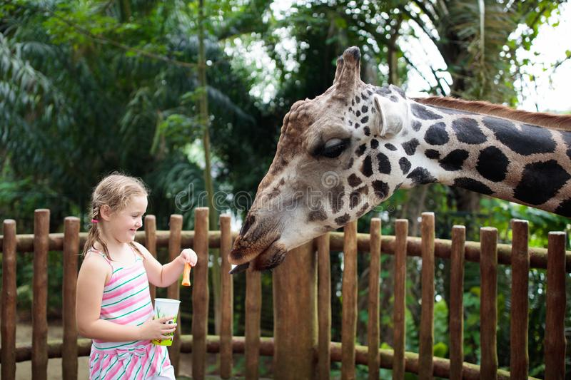 Family feeding giraffe in zoo. Children feed giraffes in tropical safari park during summer vacation. Kids watch animals. Little. Girl giving fruit to wild stock image