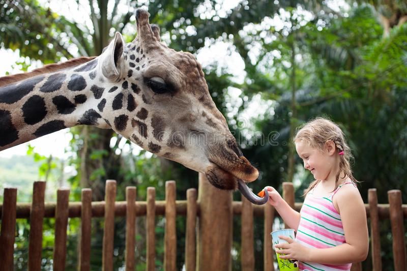Family feeding giraffe in zoo. Children feed giraffes in tropical safari park during summer vacation. Kids watch animals. Little. Girl giving fruit to wild royalty free stock photos