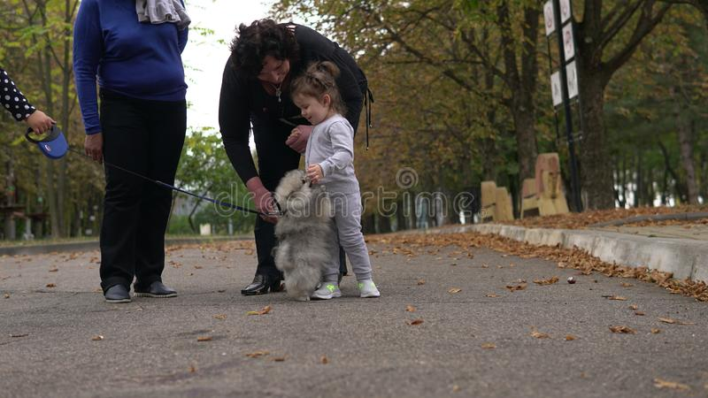 Grandmothers and little granddaughter playing with litttle dog in park. Family, generation and people concept - happy smiling grandmother and little stock image