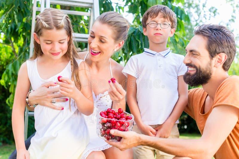 Family harvesting and eating cherries in garden stock photo