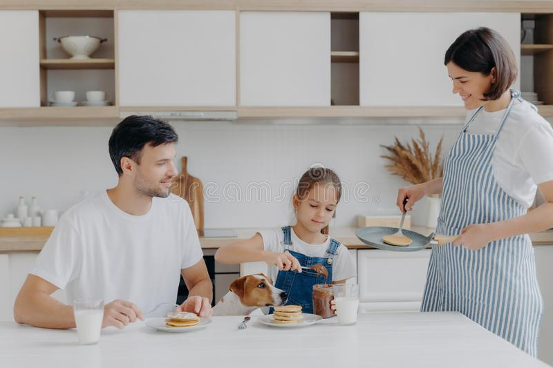 Family have breakfast at kitchen in morning. Happy girl puts melted chocolate on tasty fried pancake, poses at table with father,. Dog, mother stands near stock photo