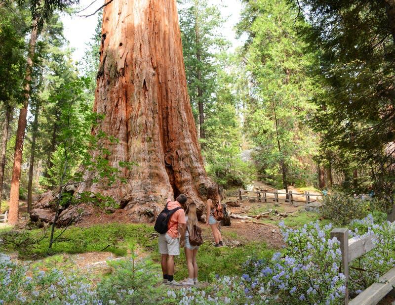 Family on hiking trip exploring sequoia trees. stock photo