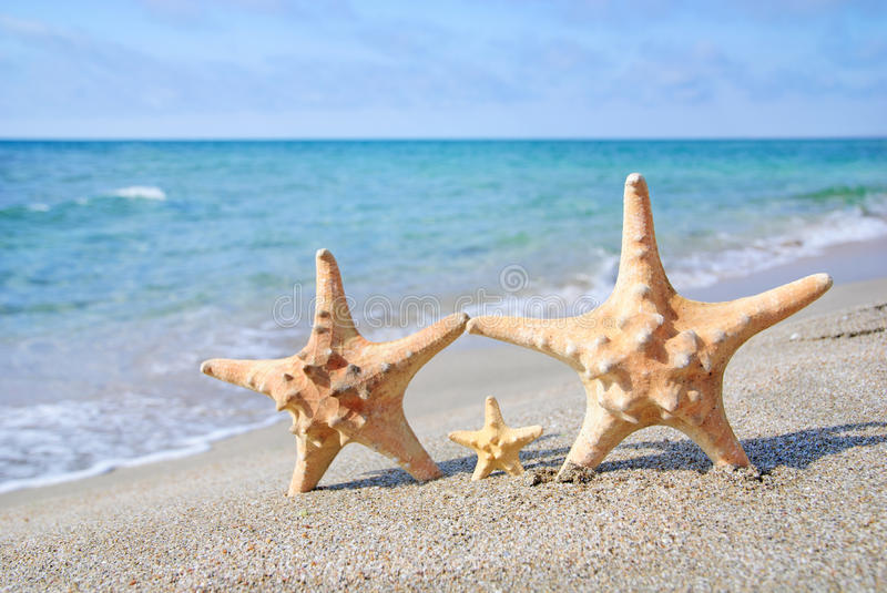 Family holiday concept - sea-stars walking on sand beach against royalty free stock photo