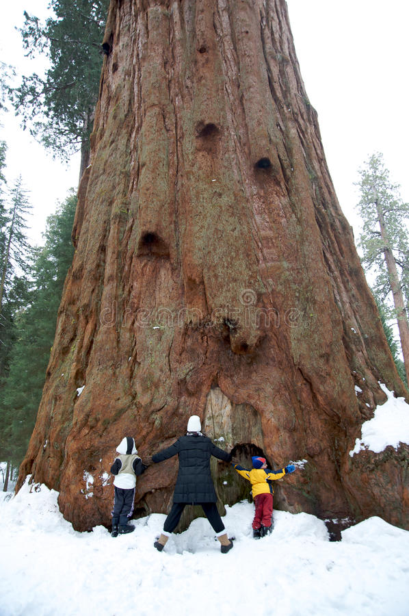 Free Family Hugging A Giant Sequoia Tree Royalty Free Stock Photography - 13755417