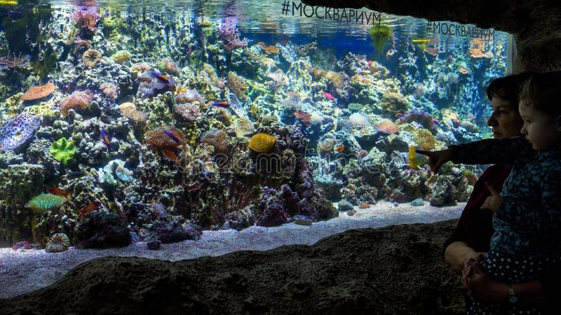 Family looks at colorful corals in beautiful aquarium. royalty free stock photography