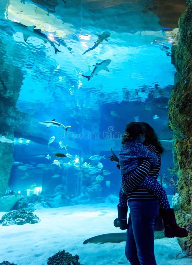 Family looks at sharks in beautiful blue aquarium stock photo