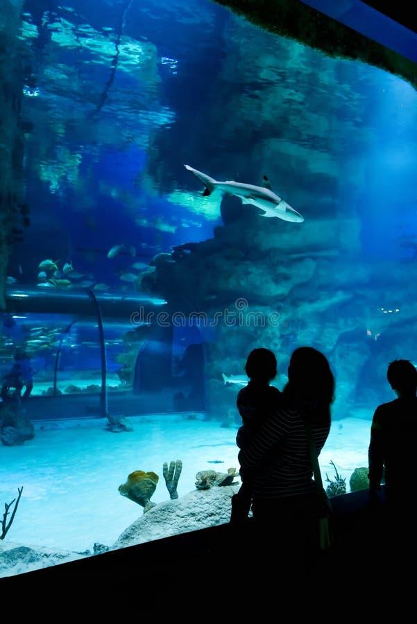 Family looks at sharks in beautiful blue aquarium royalty free stock photos
