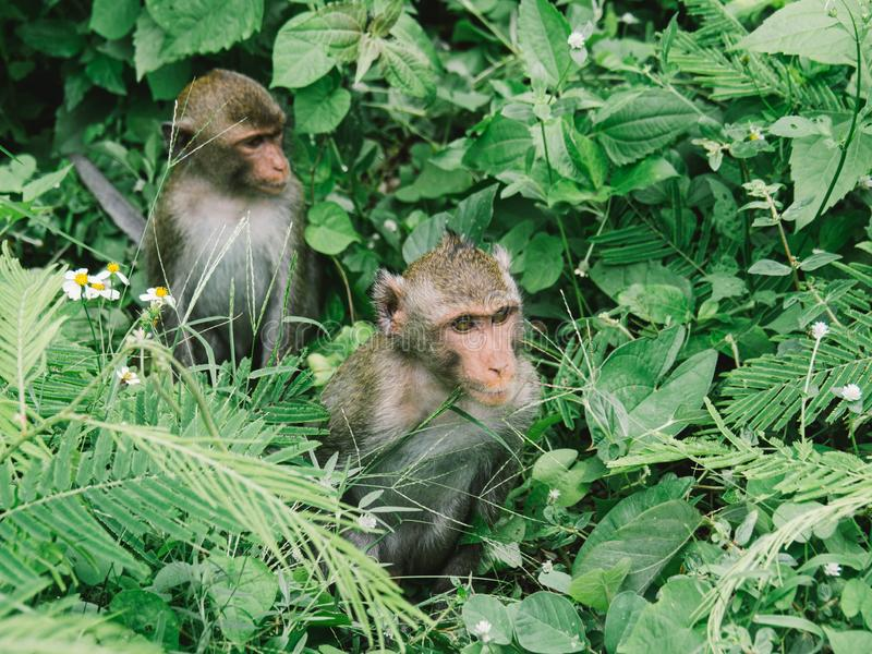 A family of monkeys sitting in the bush stock photography