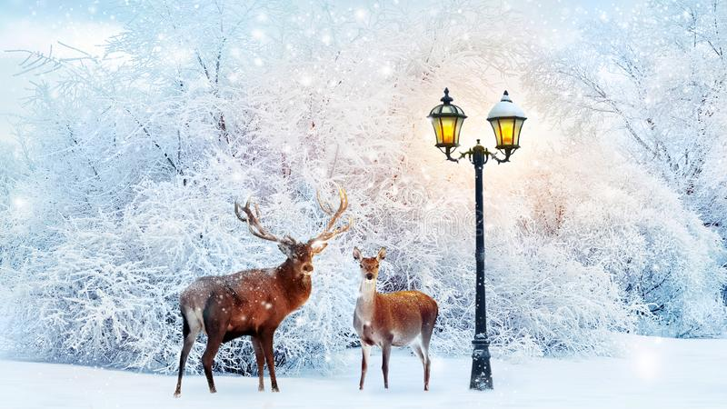 Family of noble deer in a fabulous Christmas forest on a background of snowy trees and a lantern. Composite image. stock images