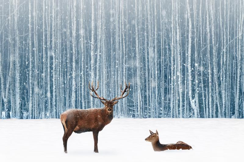 Family of noble deer in a snowy winter forest. Christmas fantasy image in blue and white color. Snowing royalty free stock photography