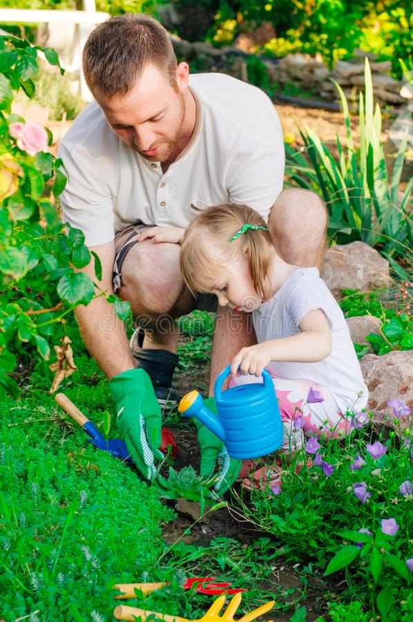Father and daughter planting succulent from a pot in the garden stock images