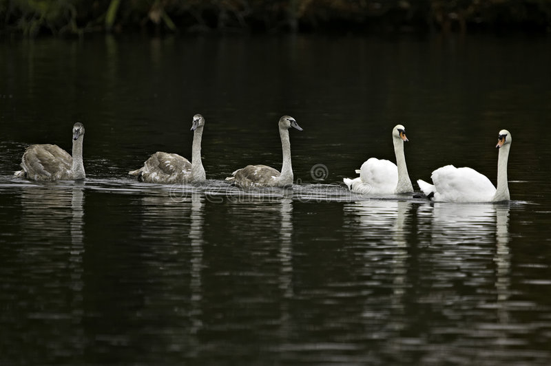 Download Family Outing Royalty Free Stock Images - Image: 511699