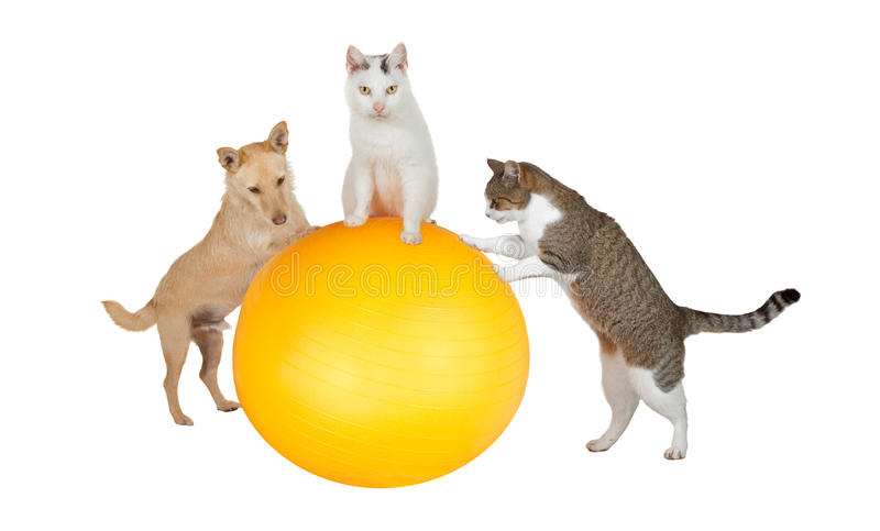 Family pets working out in the gym stock image