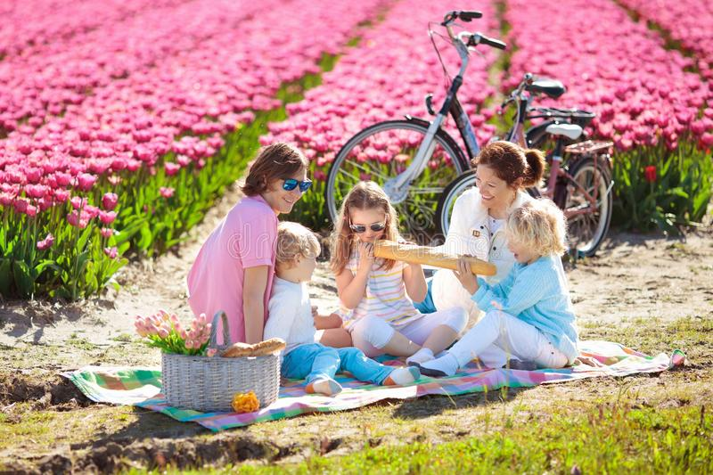 Family picnic at tulip flower field, Holland stock image