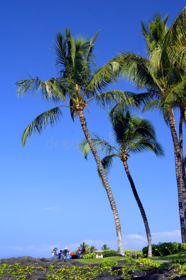 Download Family Picnic Under Palm Fronds Stock Image - Image: 14209533