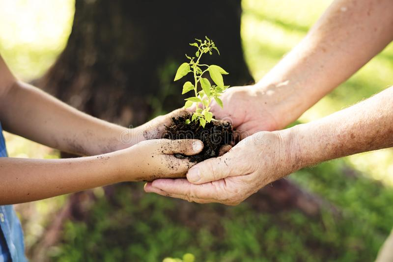 Family planting a new tree for the future stock image