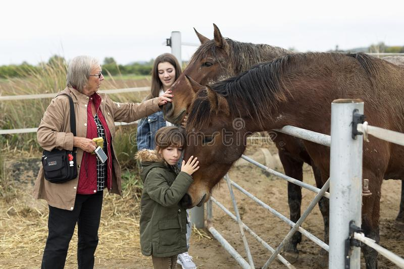 Family playing horses in a shelter in Rojales, province of Alicante in Spain. stock image