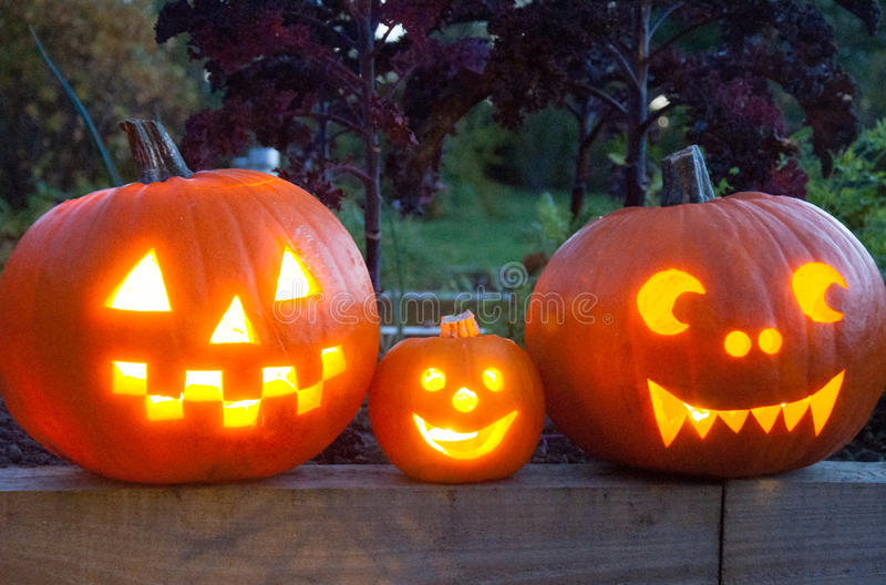Family of pumpkins with glowing eyes stock photo