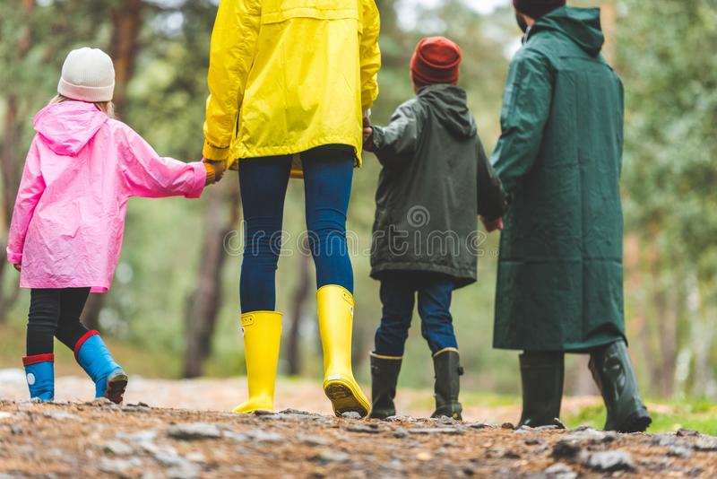 Family in raincoats walking in forest stock photos
