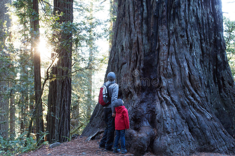 Family in redwoods forest. Family of two enjoying giant redwood tree at redwoods national park, california, usa stock images