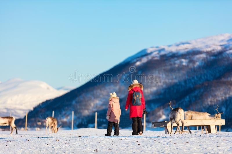 Family with reindeer. Family of mother and her daughter outdoors feeding reindeers on sunny winter day in Northern Norway royalty free stock image