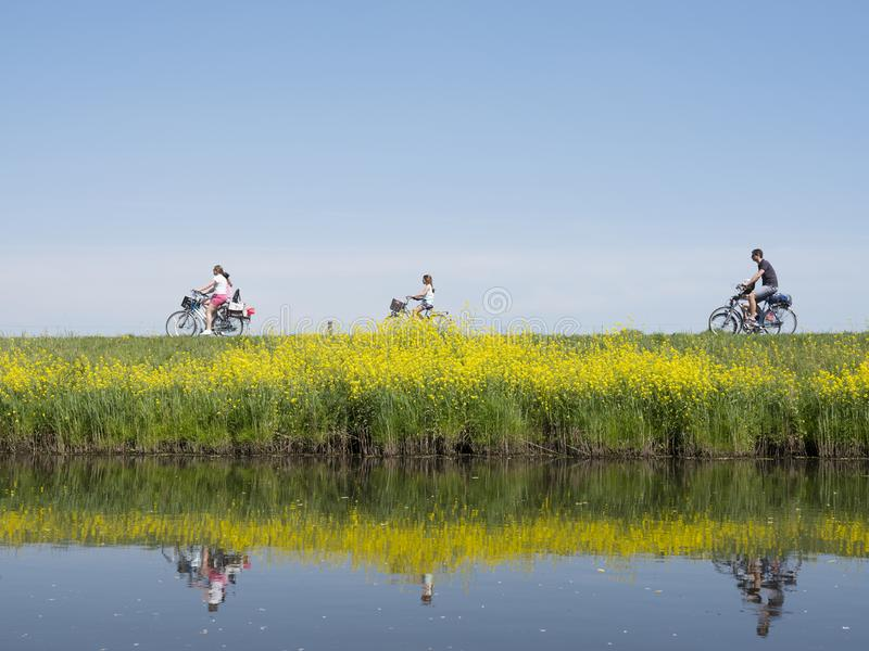 Family rides bicycle along water of valleikanaal near leusden in the netherlands and passes yellow blooming flowers of rapeseed. Family rides bicycle along water royalty free stock image
