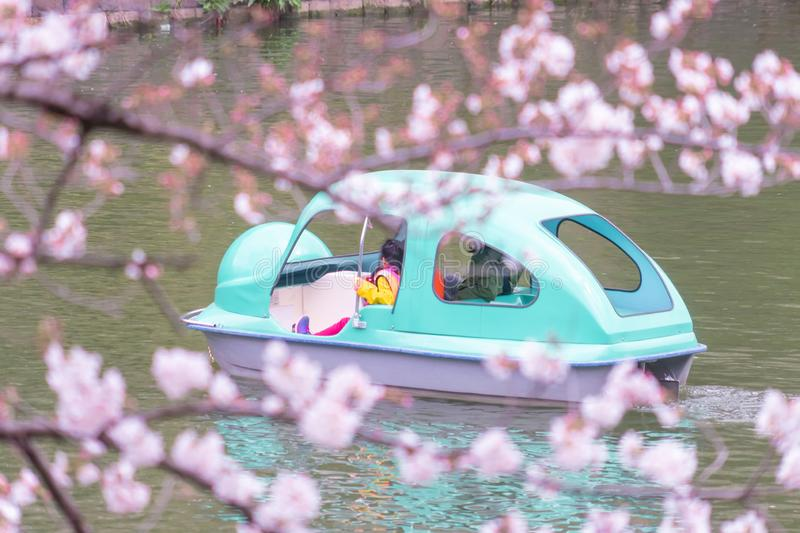 Family riding on paddle boat in Tokyo Chidorigafuchi Sakura park. Family is riding on paddle boat in Tokyo Chidorigafuchi Sakura park royalty free stock photo