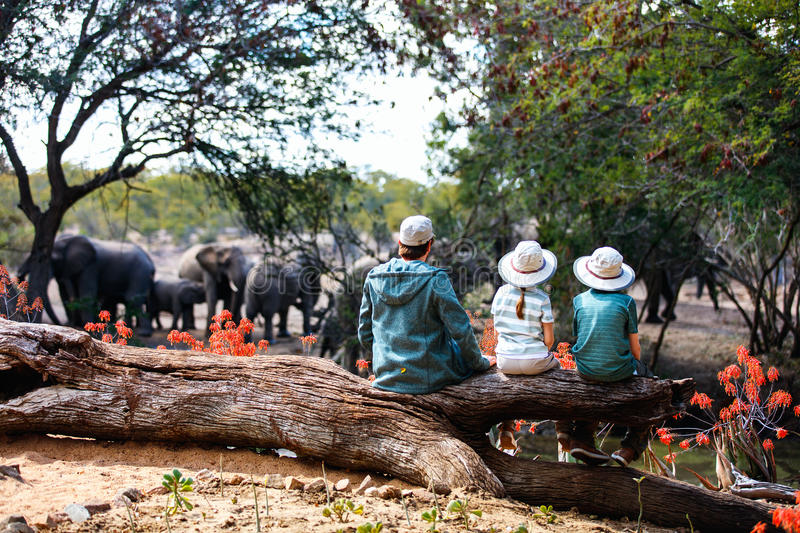 Family safari. Family of father and kids on African safari vacation enjoying wildlife viewing at watering hole royalty free stock image