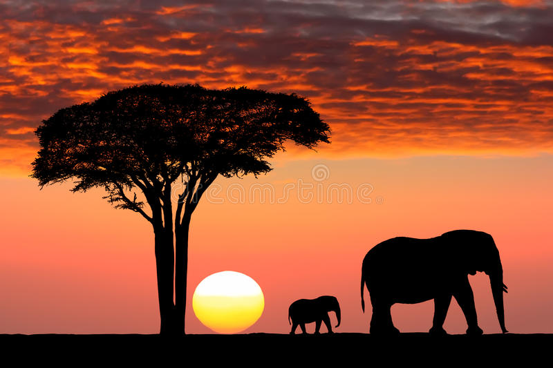 Image Of Africa Family Majestic