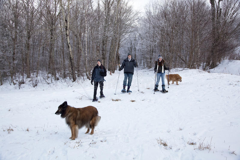 Download Family Snowshoeing With Dogs Stock Photo - Image: 12537298