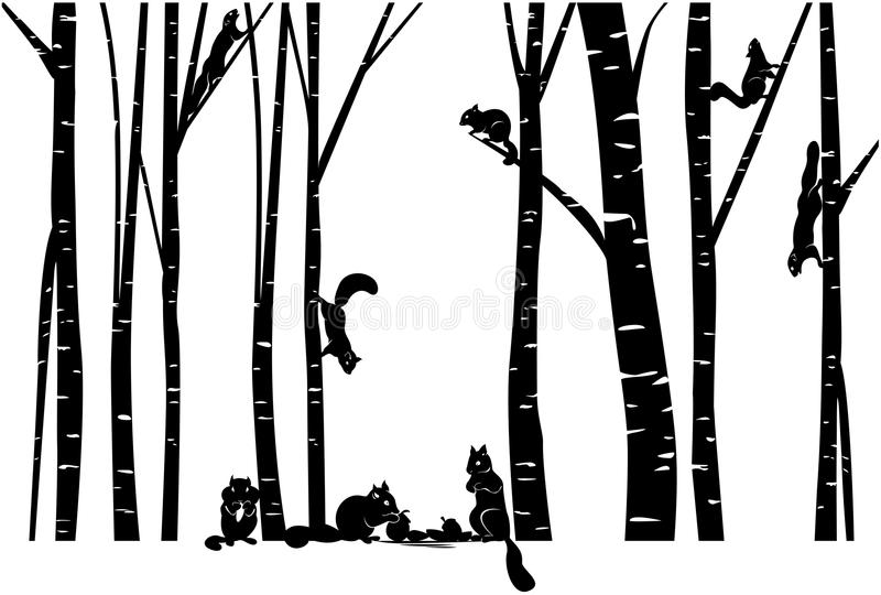A family of Squirrel in Birch forest stock illustration