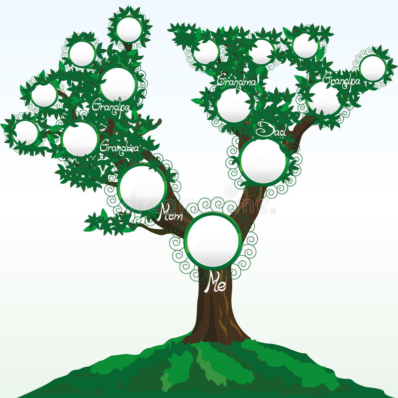 Family tree. With place for photos or names, illustration additional royalty free illustration