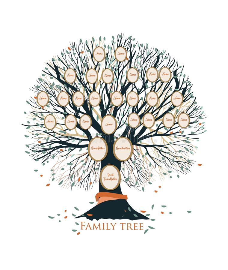 Family tree or genealogical chart template with branches and round portrait frames isolated on white background. Representation of links between relatives and royalty free illustration