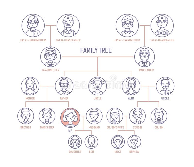 Family tree, pedigree or ancestry chart template with men s and women s portraits in round frames. Representation of. Links between relatives and their royalty free illustration