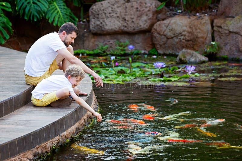 Feeding koi fish stock image