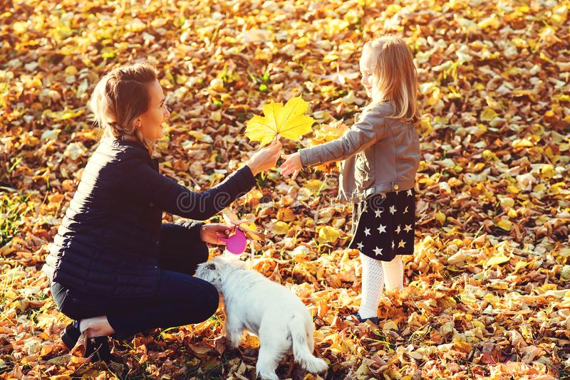 Family walk in the autumn park. Happy family and their dog enjoying fallen leaves on nature. Mother, daughter and dog outdoors. Au stock photos
