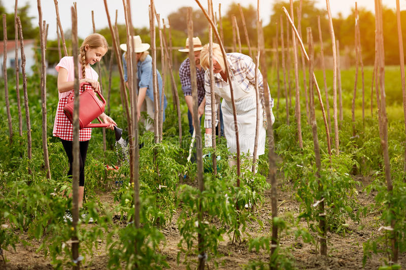 Family work in garden royalty free stock image