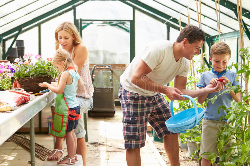 Family Working Together In Greenhouse Stock Photo - Image ...