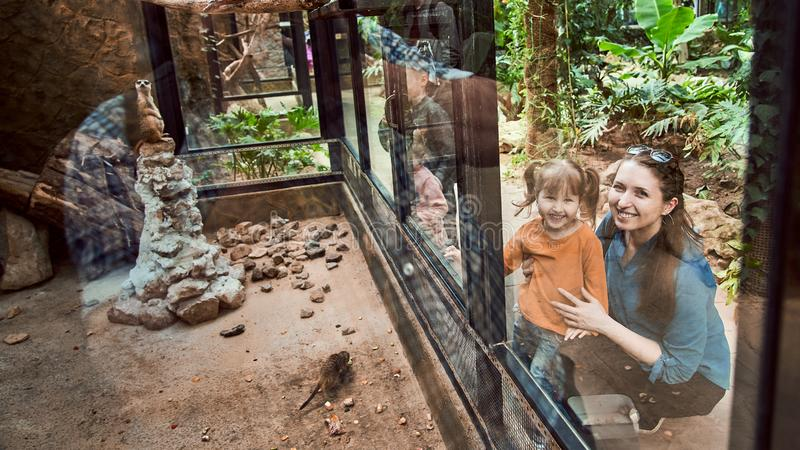 The family at the zoo look at the animals through a safety glass. Happy children are delighted with the animals seen in the zoo royalty free stock photos