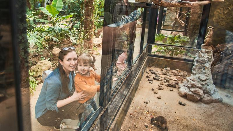 The family at the zoo look at the animals through a safety glass royalty free stock image