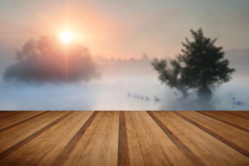 Familyof swans swim across misty foggy Autumn Fall lake at sunrise with wooden planks floor stock photos