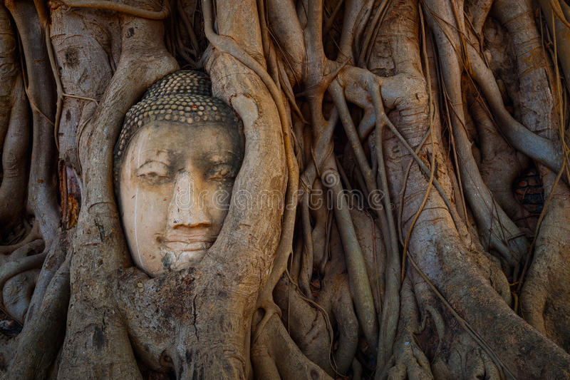Famous Buddha Head with Banyan Tree Root at Wat Mahathat Temple in Ayuthaya Historical Park. A UNESCO world heritage site, Thailand royalty free stock photography